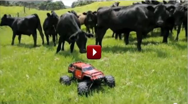 Redcat Racing Friday Fun Feature Having Fun With Cows RC Video
